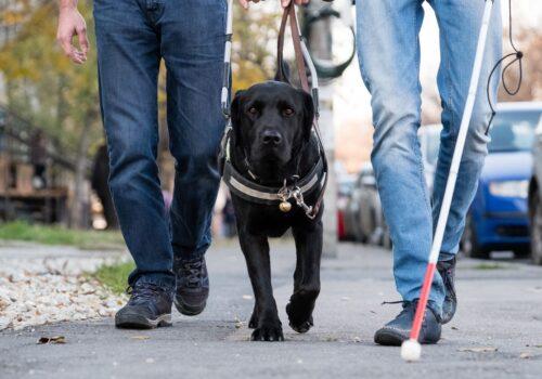 Două persoane se plimbă pe Splaiul Unirii. Unul dintre aceștia are un baston în mână, iar în cealaltă lesa unui câine ghid. Imaginea este focalizată pe câinele ghid, care merge între cele două persoane.